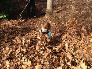 Our mega leaf pile. We waited until January to rake the leaves to be really, really, really sure they had all fallen.